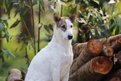 狂犬病莫輕忽可致死,恐得急性病毒性腦脊髓炎
