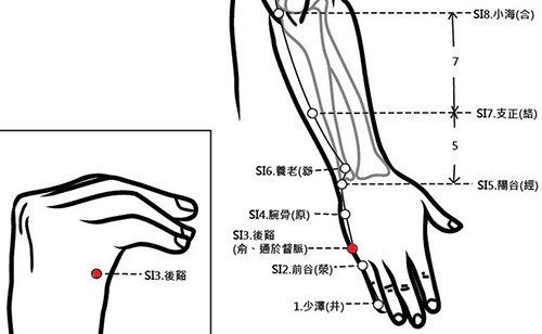 穴位保健─後谿穴(脊椎保健好穴位)