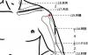 穴位保健─肩髃穴(五十肩的預防)