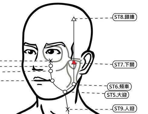 穴位保健─下關穴(除皺紋增耳力消牙痛)
