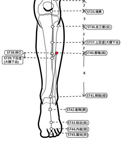 穴位保健─豐隆穴(消血脂除痰止打呼)