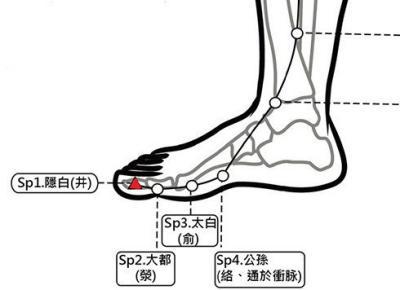穴位保健─隱白穴(月事量中風大腿無力)