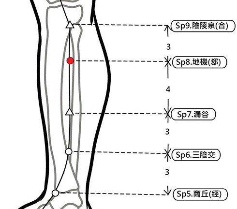穴位保健─地機穴(調血糖除經痛)