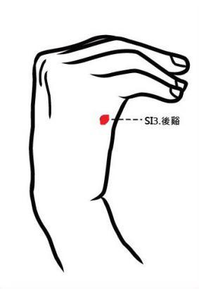 穴位保健─後谿穴(通暢脊椎氣血)