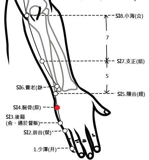穴位保健─腕骨穴(落枕頭不能轉)