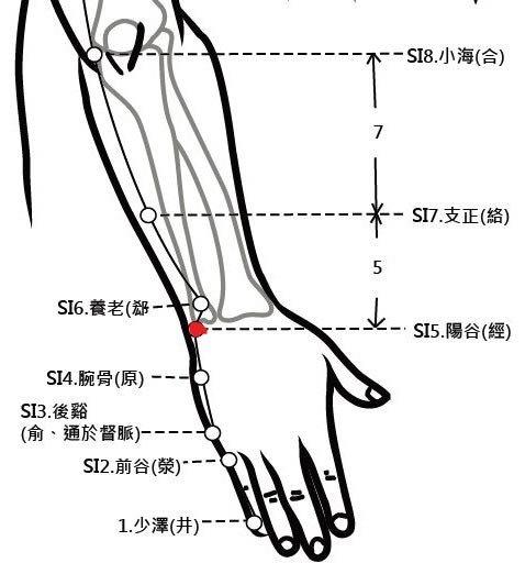 穴位保健─陽谷穴(清心明耳目除腕疼)