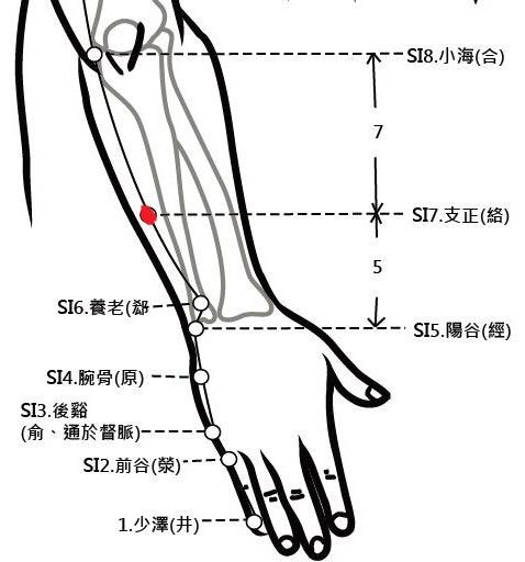 穴位保健─支正穴(消除贅疣美麗肌膚)