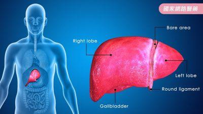 吃什麼對肝臟好?強化肝臟健康的食材