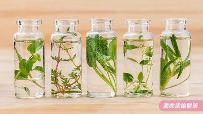 芳香療法紓緩情緒、提升免疫,健康又美好!