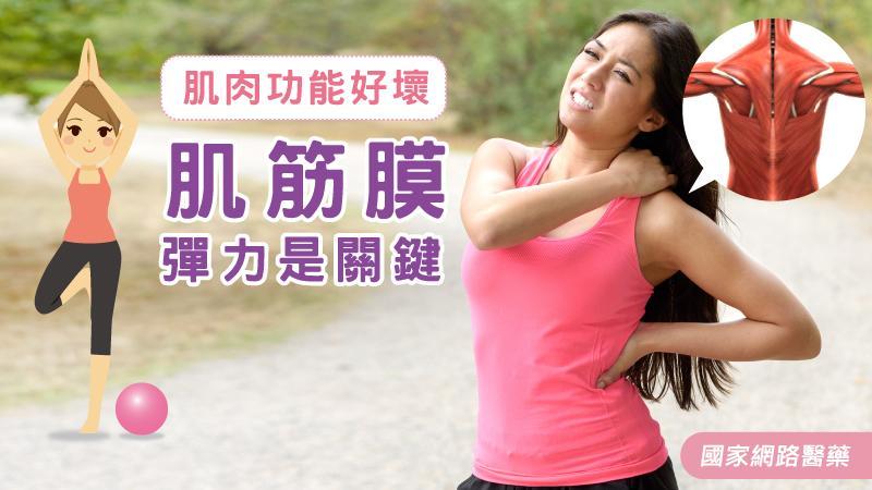 肌肉功能好壞 肌筋膜彈力是關鍵