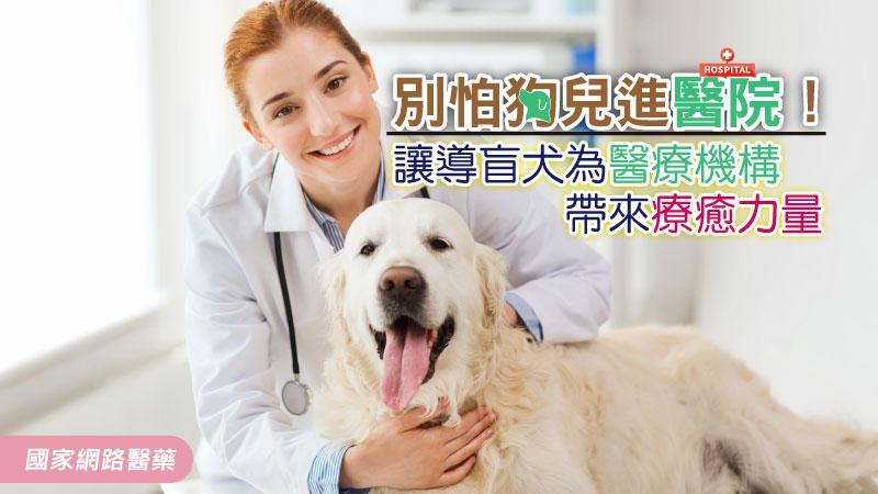 別怕狗兒進醫院!讓導盲犬為醫療機構帶來療癒力量