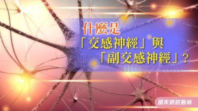 什麼是「交感神經」與「副交感神經」?